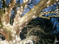 Romantic wedding string lights wrapped around tree