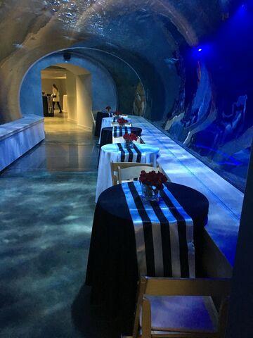 Detroit Zoo Weddings - Royal Oak, MI