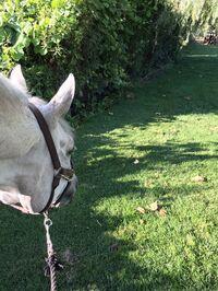 stalkinghorse