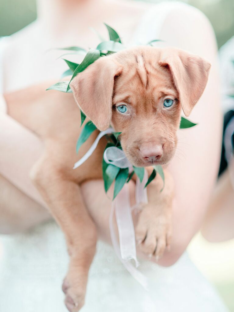 Bride with cute puppy bouquet