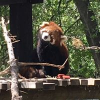 pandappanderson