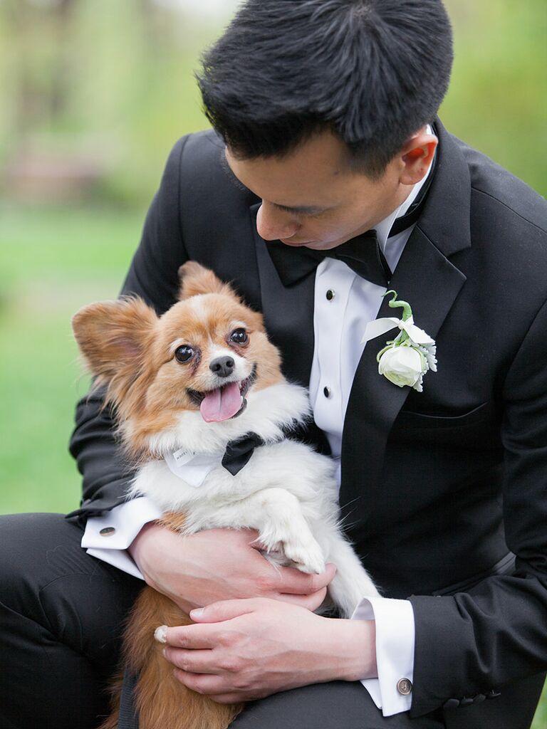 Wedding puppy in a bow-tie