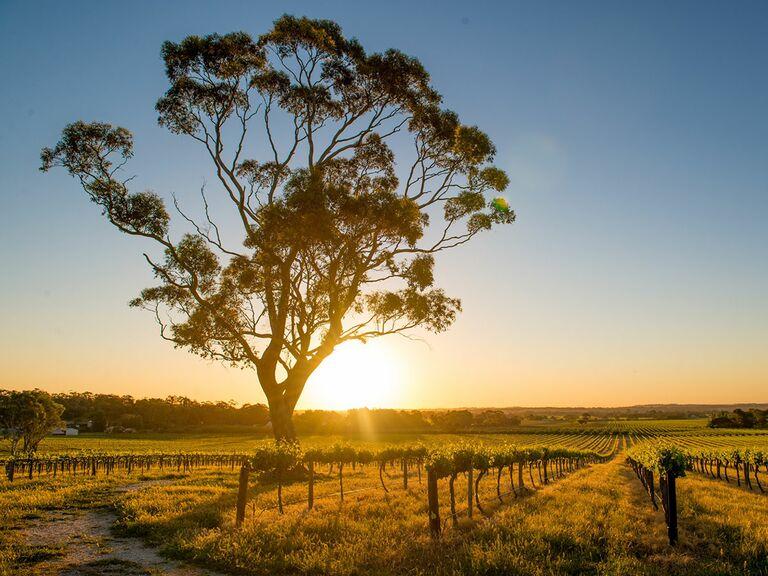 Sunset over Barossa Valley, Australia