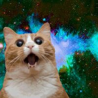 Cats*in*space