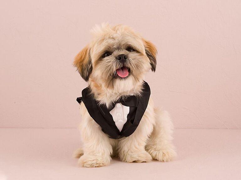 Black dog tuxedo