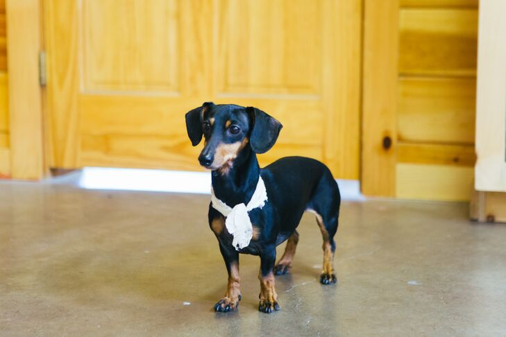 The couple's adorable dachshund was part of the ceremony and reception.