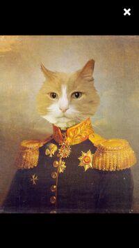 AdmiralKitty