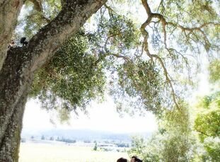 Wine country was the perfect backdrop for Jen and Dario's romantic garden inspired wedding. Healdsburg Country Gardens, where the couple wed, provided