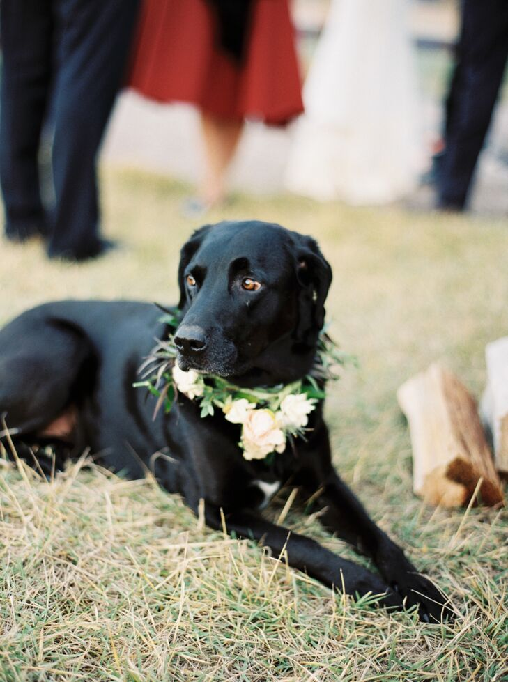 """Our family stood around us during the ceremony while our dog ran around and chased squirrels,"" Sarah says. ""We had to have him around all day—he is our love child!"""