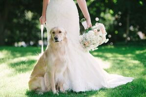 Golden Retriever Wedding Dog