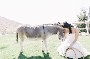 Bride Posing With Donkey