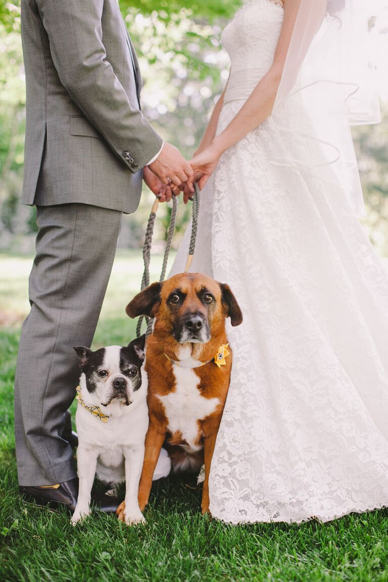 Wedding dogs 7 ways to dress your wedding dog wedding dog idea coordinating collars ombrellifo Choice Image