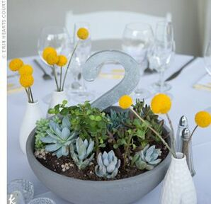 Succulent Reception Centerpieces