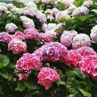 gardeniagirlknits