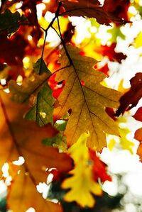 autumn230
