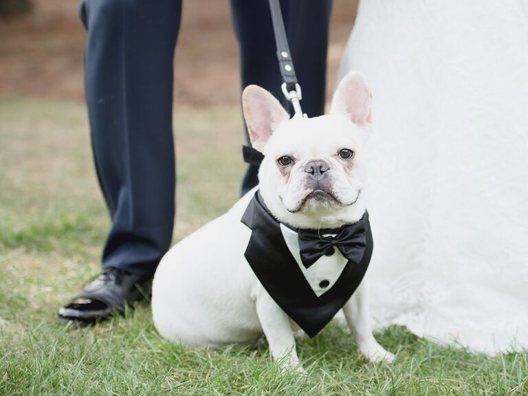 87453476d3 Dog Wedding Outfit Ideas Paw-fect for Your Pup