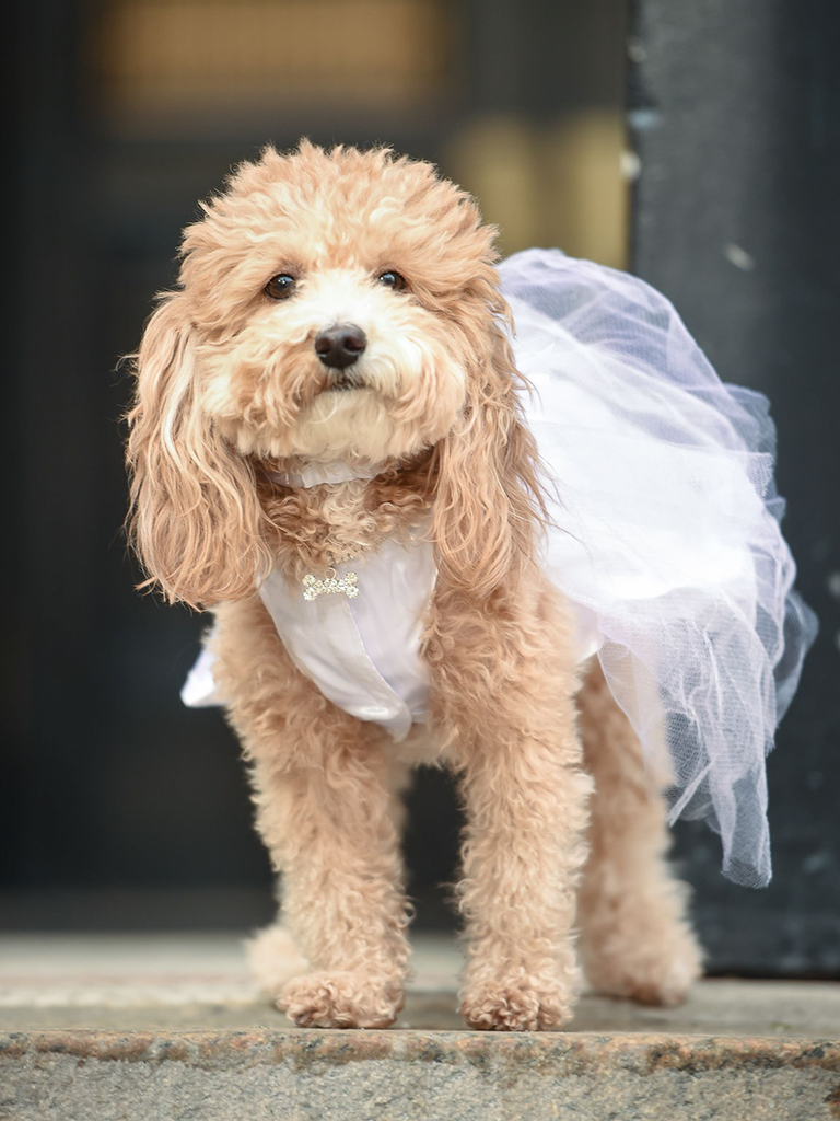 The Cutest Wedding Dogs You\'ll Ever See