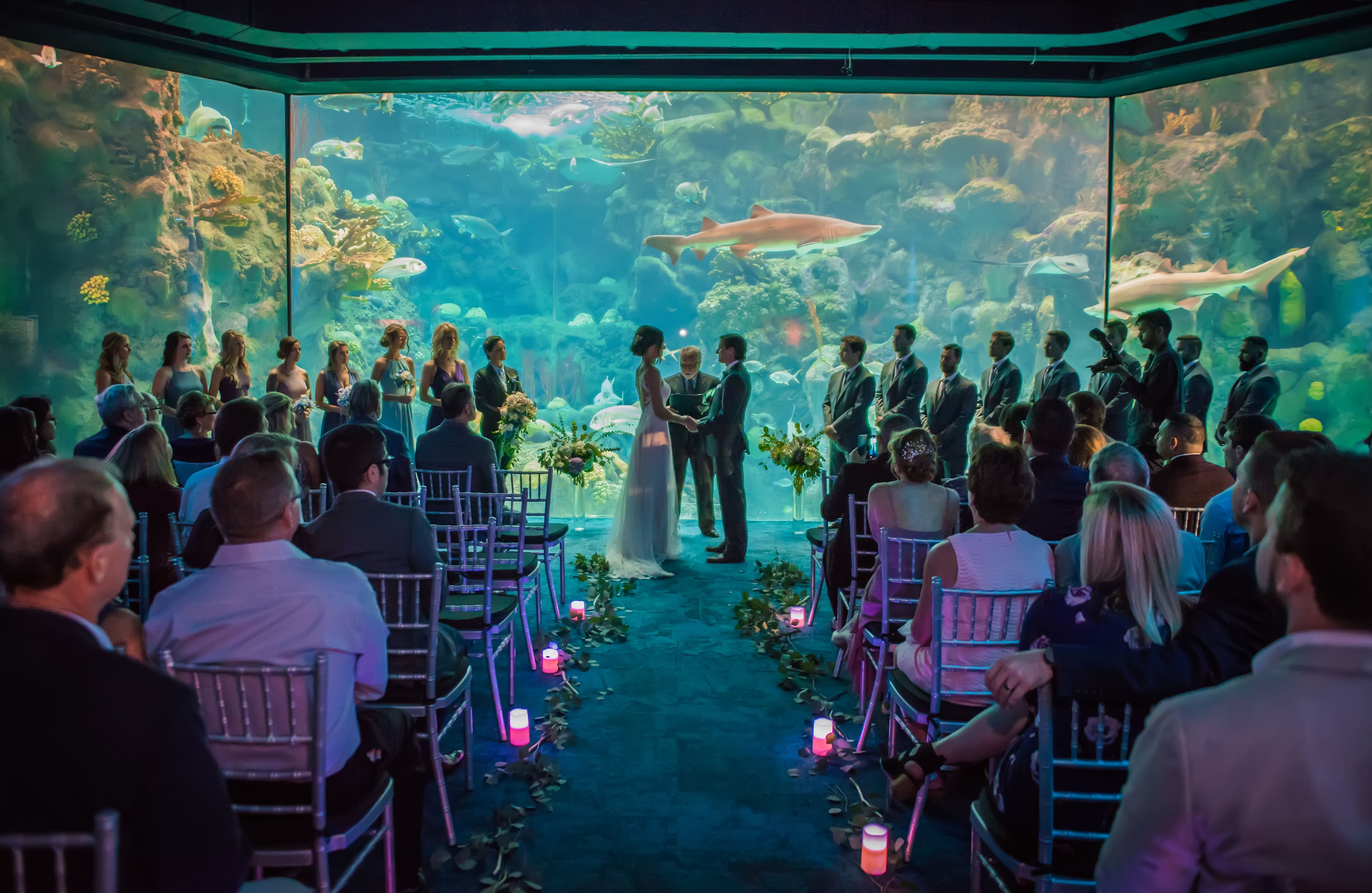 Cherished Ceremonies Weddings Tampa Wedding: Reception Venues - Tampa, FL