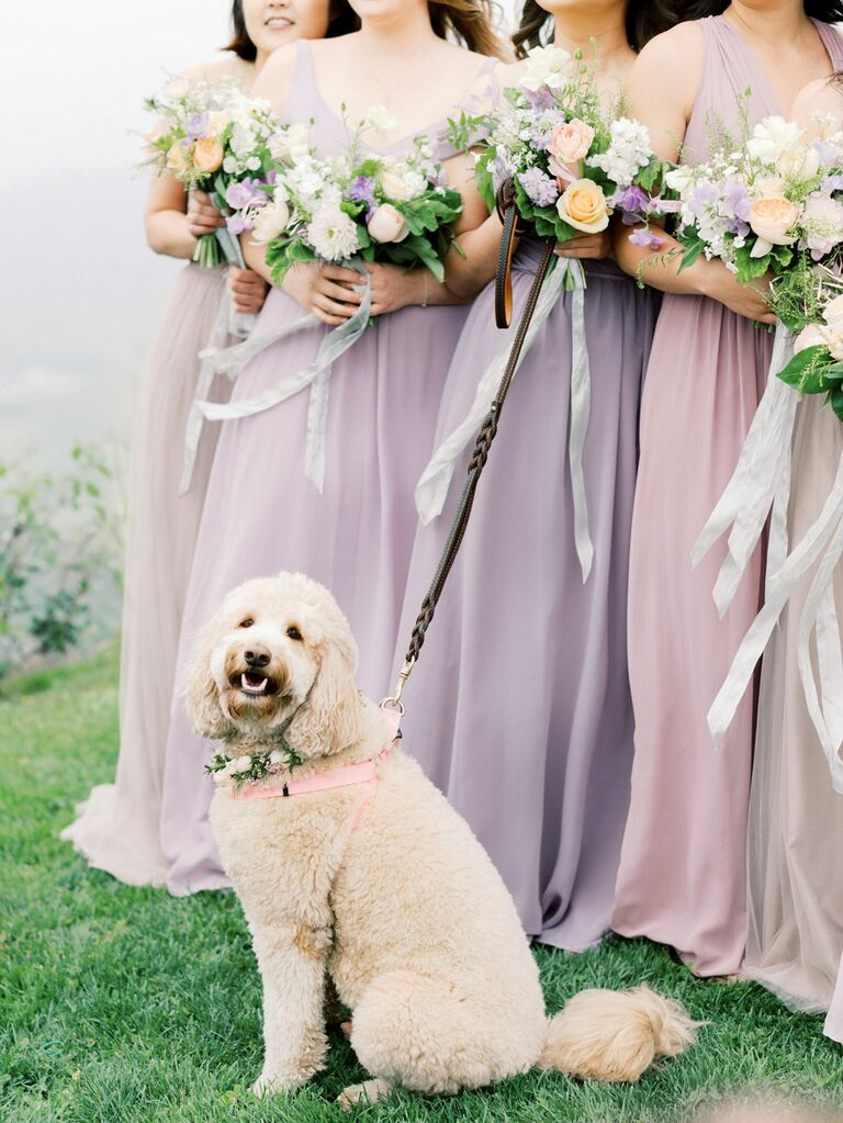 Bridesmaids posing with dog during wedding portraits