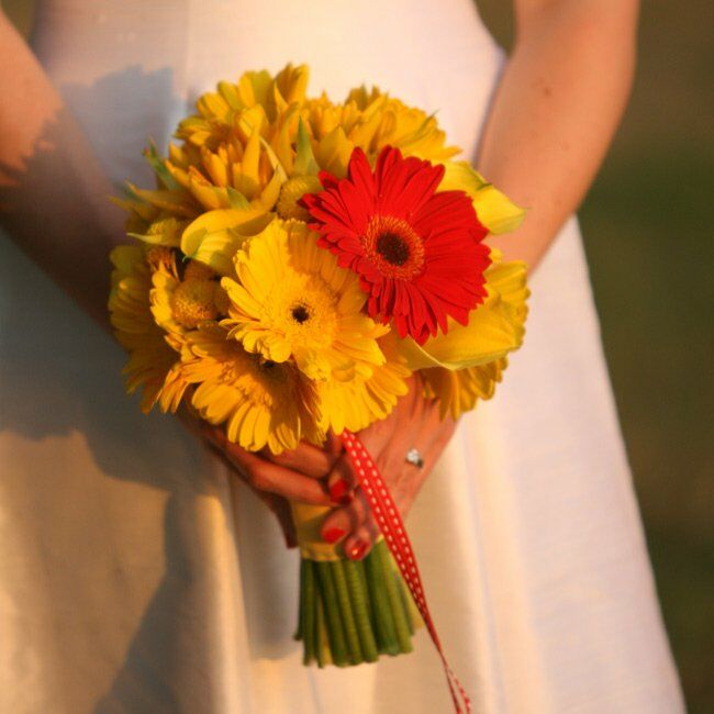 A single red gerbera daisy stood out among the yellow gerbera daisies, calla lilies, and bromeliads. Red-and-white polka-dotted ribbon added movement to the tightly-packed bouquet.