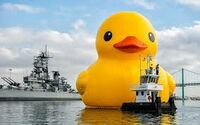 ducks6