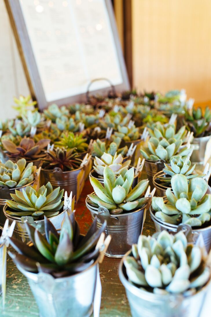 """The couple thanked guests with baby succulents potted in small silver pails. """"We wanted to give our guests something they could remember us by as it grew and flourished in their home,"""" says Stefanie. Succulents come in a huge variety of shapes, colors and they are so beautiful that they almost look fake!"""""""