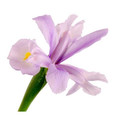 Wedding flower guide with season color and price details purple iris flower mightylinksfo Choice Image