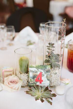 Cactus and Succulent Centerpieces