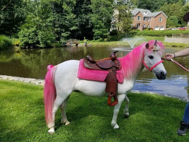 Pink Unicorn Pony