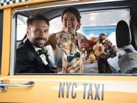 newlyweds getting into taxi with dog in nyc