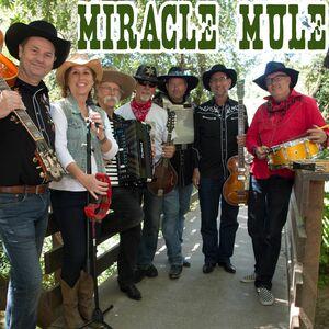 San Rafael, CA Americana Band   Miracle Mule
