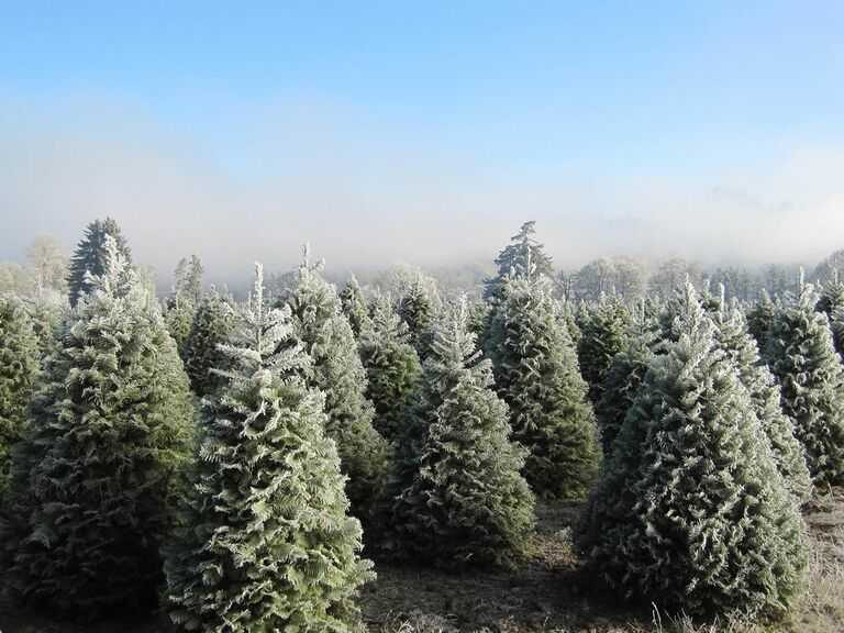Northern Lights Christmas Tree Farm in Pleasant Hill, Oregon - 10 Christmas Tree Farms Where You Can Actually Get Married