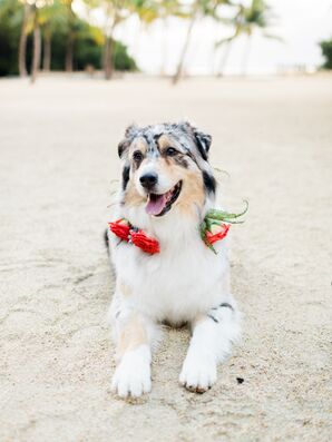 Dog with Red Rose-Accented Collar