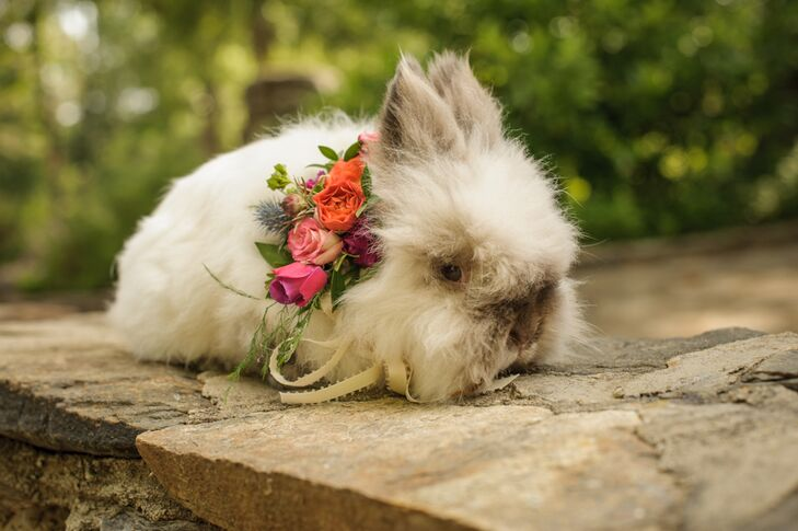 Chelish Moore Flowers even made a special pet floral collar for Rosie the Bunny with bright pink, orange and purple roses accented with light greenery.