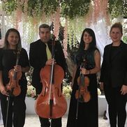Miami, FL String Quartet | Amadeus Enterprises