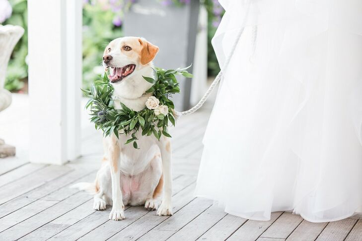 Leashed Dog with Whimsical Greenery Wreath