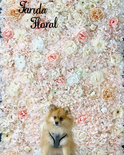 Farida Floral - Gorgeous Flower Wall Renal - Affordable