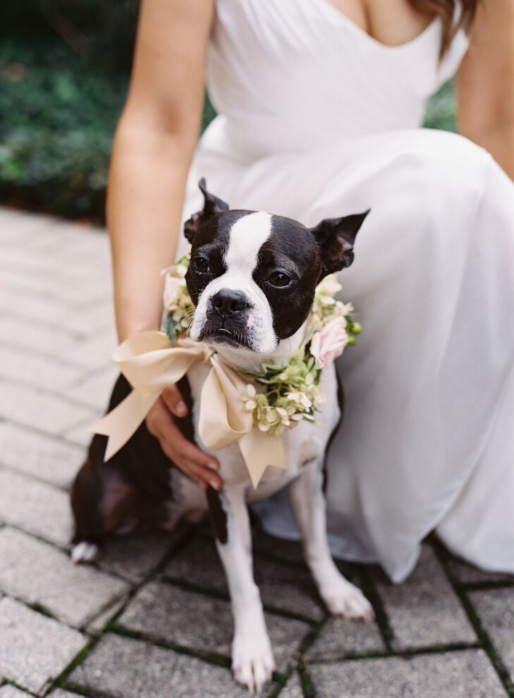 The couple's dog, Owen, was the ring bearer and wore a wreath of pink and taupe roses with green hydrangea around his neck.