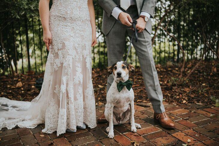 Dog with Elegant Black Bowtie