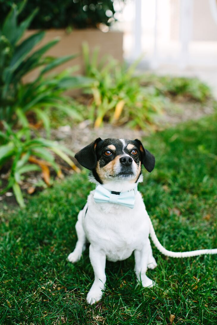 "Amanda and Thadd's dog, Baxter, was also present for their wedding day. ""We have no shame in saying that we are obsessed with him,"" Amanda says."