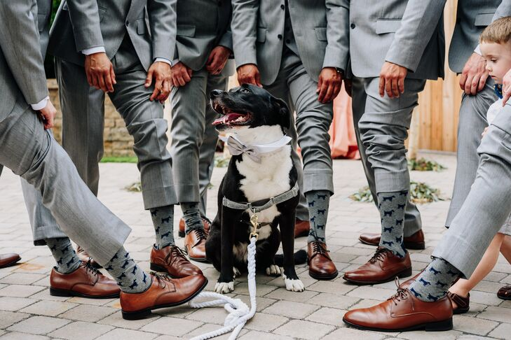 Matching Groomsmen Socks with Ring Bearer Dog