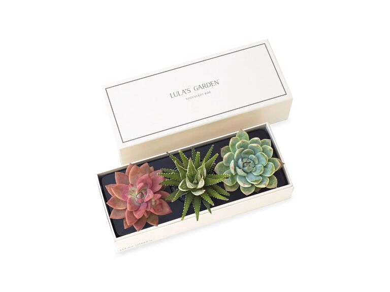 Succulent gift box for daughter-in-law