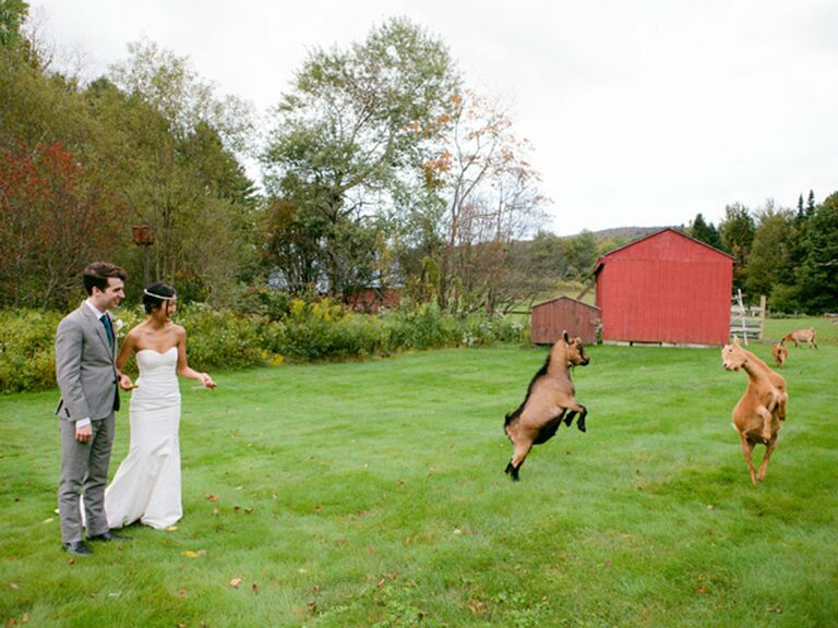 bride and groom with goats at a farm wedding