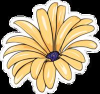 daisy528