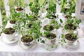 Vintage Teacup Favors With Lemon Tree Saplings
