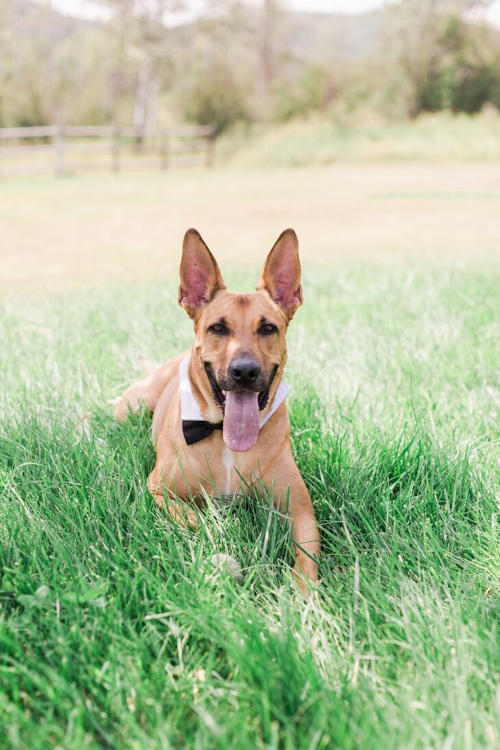 Puppy Bow Tie and Shirt Collar