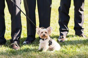 Puppy Tuxedo