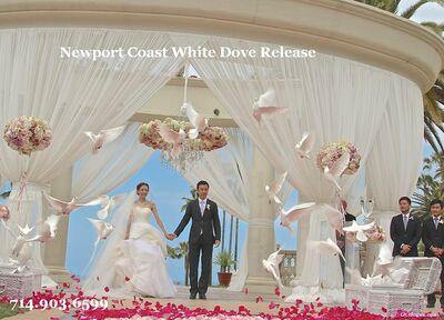 Orange County White Dove Release   714 903-6599