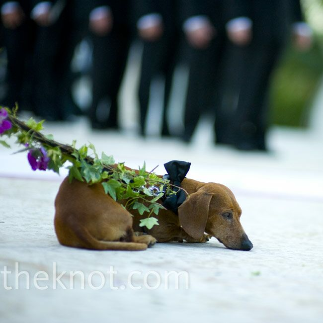 Wedding Party Dog