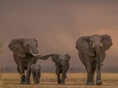 5 Insanely Gorgeous Safaris—and How to Choose One